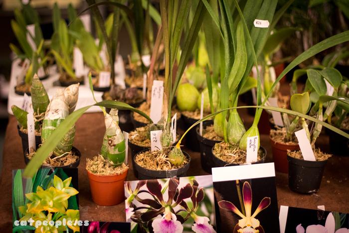 Bulbos de orquídea