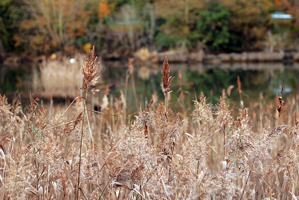 Plantas junto al río en Ribadasella