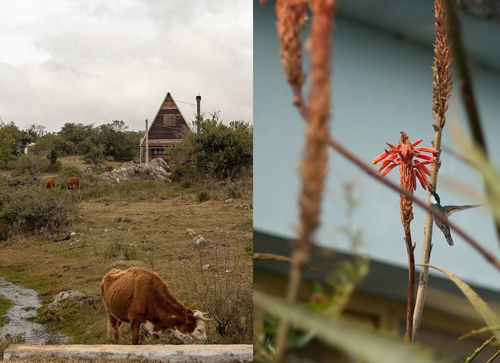 Villa Serrana Vaca y Colibrí